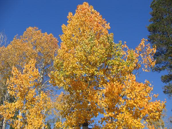 Bell Meadow in Fall